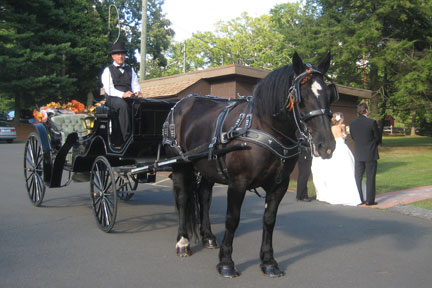 Dolly Percheron